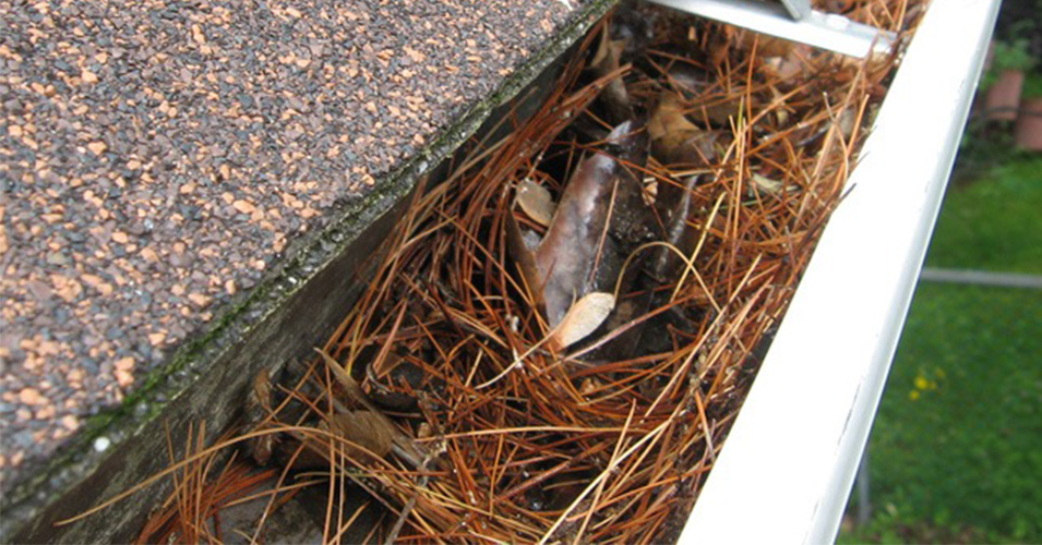 Clean Out Your Gutters – Not Your Wallet